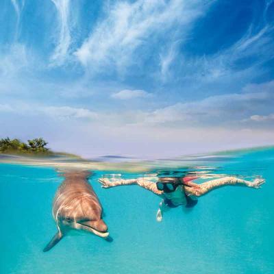 Dolphin Swim Program Playa del Carmen