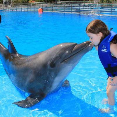 Private Dolphin Swim (2px)