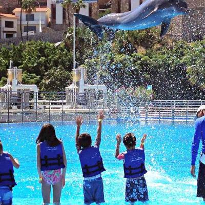 Private Dolphin Swim (6px)