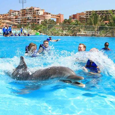 Dolphin Swim & Ride Experience