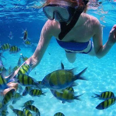 Safari Snorkel Camping