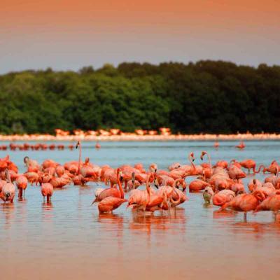 Excursión de un día a la Reserva Ecológica de Celestún desde Mérida