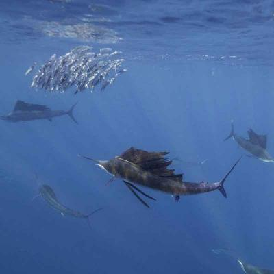 Sailfish Eco Adventure Tour: Cancún