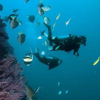 Scuba Dive at Las Caletas