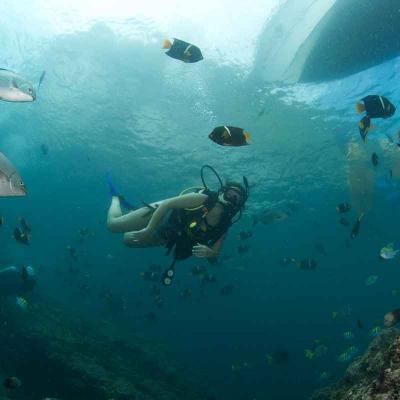 Scuba Dive at Los Anegados