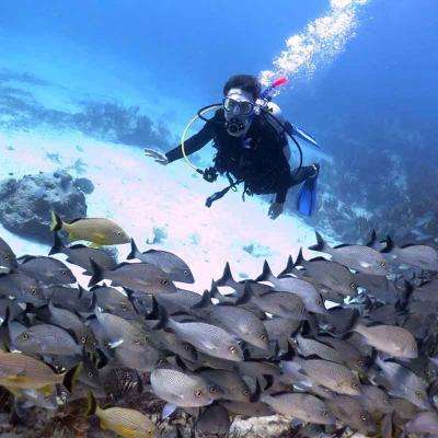 Scuba Dive At Los Arcos