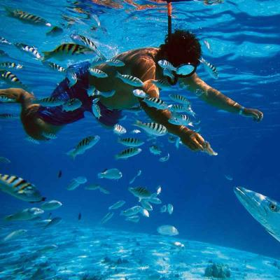 De Luxe Snorkel and Lobster