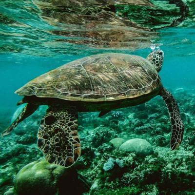 Marine Turtle Observation Akumal Cancún