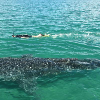 Swimming with Whale Shark  (Niño)