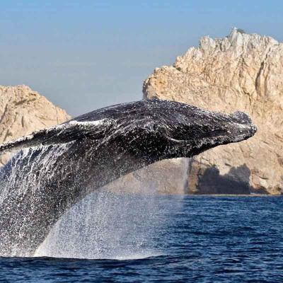 Avistamiento de ballena gris con Estacia