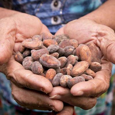 Tour de medio día al Museo del Chocolate con degustación desde San Cristóbal
