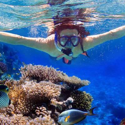 Cabo Pulmo Snorkel Adventure