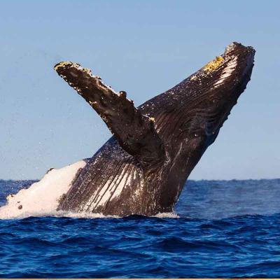 Precious Toon Whale Watching